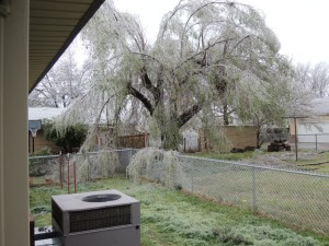 Tree in El Reno, OK.