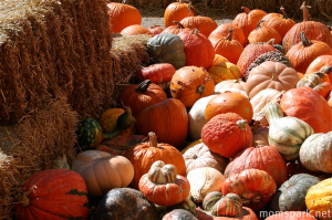 Gobs of gourds!