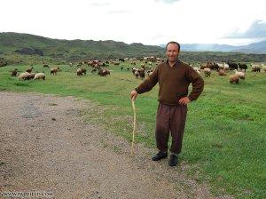 ararat-shepherd
