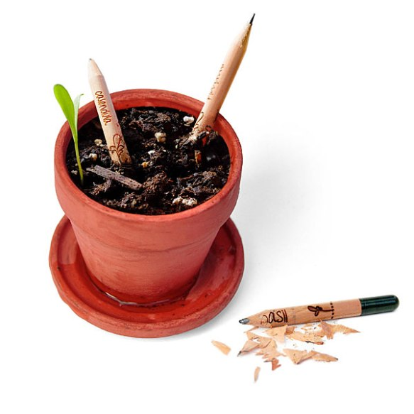 1e9a_sprout_growing_pencils