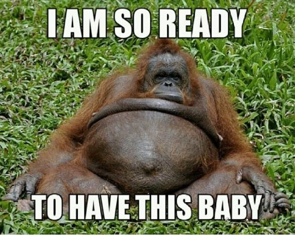 Orangatan-Pregnancy-Meme-Humor (2)